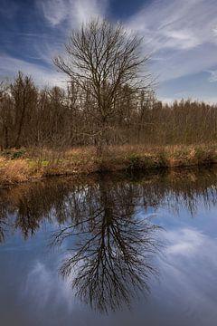 Boom en zijn reflectie in water