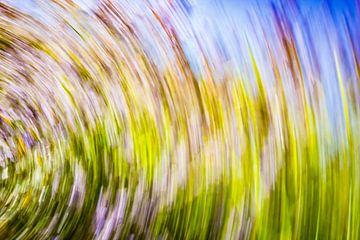 daytrails - abstracte kunst - bomen - zon - groen - rood - blauw van Sven Van Santvliet