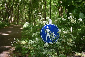 Wandern in den Dünen von Noordwijk von Maartje Abrahams