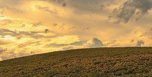 Zonnebloemen Frankrijk van Renso Profijt