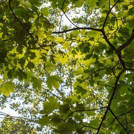 Groen bladerdek onder een felle zon van Marcel Alsemgeest