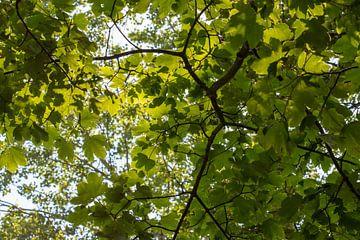 Grünes Laub unter heller Sonne von Marcel Alsemgeest