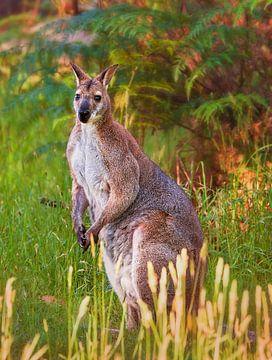 Kangoeroe van Anouschka Hendriks
