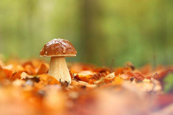 Paddenstoel tussen bladeren van Erik Veltink