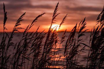 Winter Sonnenuntergang von Koen Hoekemeijer