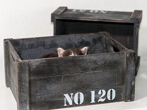 Kitten serie I