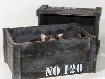 Kitten serie I van Rob Smit