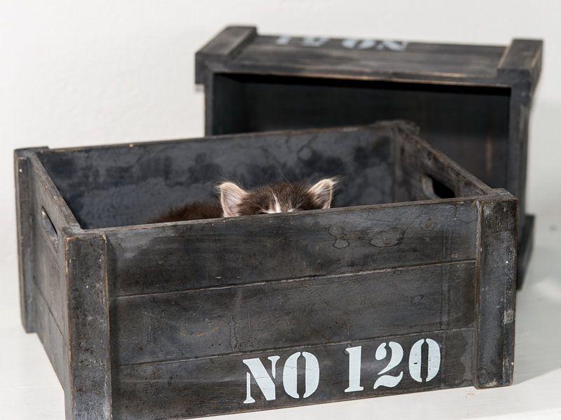 Kitten serie I von Rob Smit