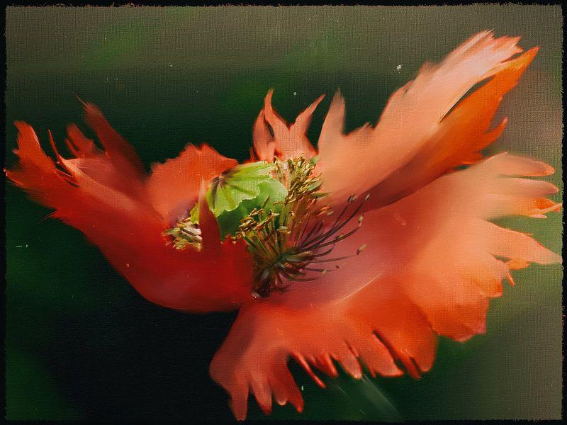 Klaproos schilderij - Roodgerande klaproos van Christine Nöhmeier