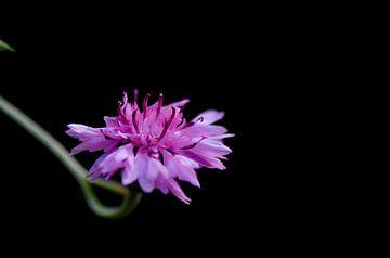 solo bloemetje von Mieke Verkennis