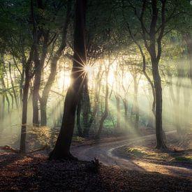 Panorama dans la forêt sur Edwin Mooijaart