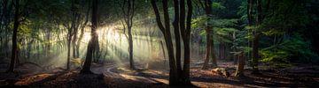 Panorama im Wald von Edwin Mooijaart