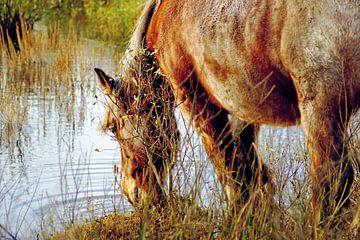 Pferde trinken in freier Wildbahn von Foto Graaf Eric