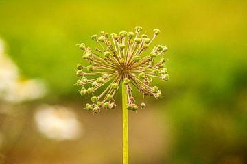 Wald Blumen Feld Landschaft Erzgebirge Pilze von Johnny Flash