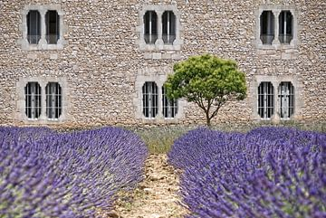 Kloster-Lavendel Provence van Joachim G. Pinkawa