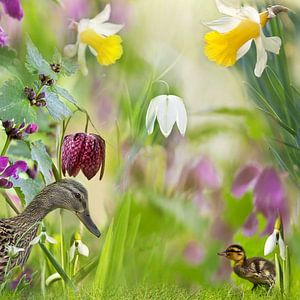 Vrolijk voorjaar met eenden van