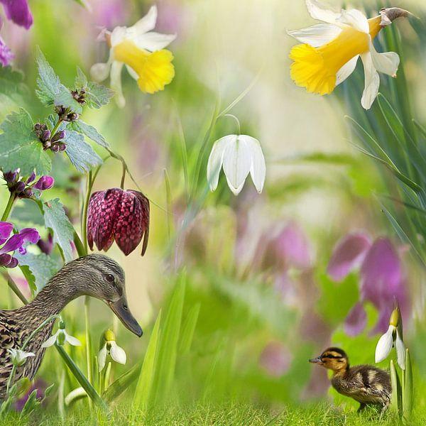 Vrolijk voorjaar met eenden van Teuni's Dreams of Reality