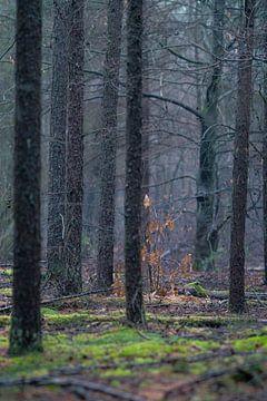 Nebel im Winterwald von Mischa Corsius