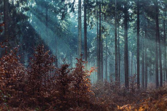 Het reichswald, Duitsland van Above The Grid