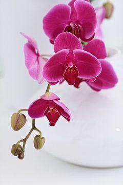 Stijlvolle witte vaas met roze orchideeën in wit interieur van Tony Vingerhoets