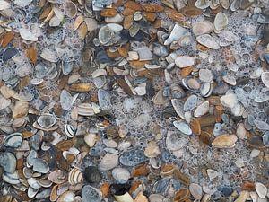 Kleine schelpjes liggen op het strand en water overspoelt ze van Helene Ketzer