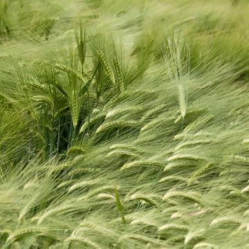 Wuivend koren von Ellen Driesse