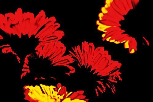 rot, gelb und schwarz von Hanneke Luit