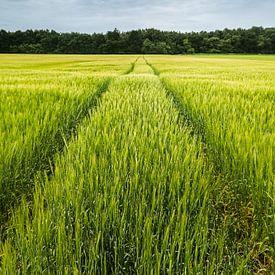 Road to nowhere II van Francis de Beus