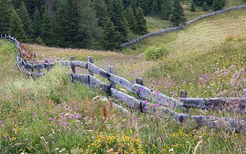 Blumenwiese mit Holzzaun von Klaartje Majoor