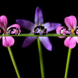 Wassertropfen mit Reflexion von Blumen von Inge van den Brande