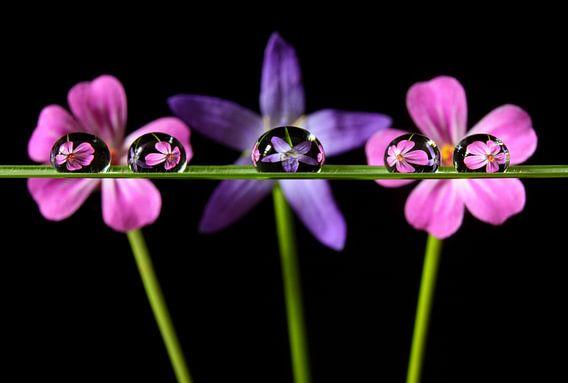 Waterdruppels met reflectie van bloemen