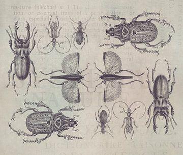 Käfer von Andrea Haase