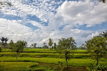 Großartiges grünes Reisfeld. Buleleng Regency, Bali, Indonesien von