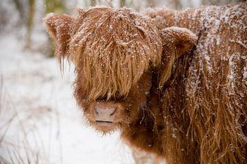 Niederländischer Winter von Joyce Beukenex