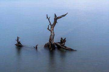 Baumstumpf im Wasser