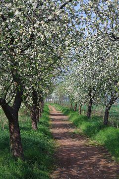 Weg mit blühenden Apfelbäumen von Karina Baumgart