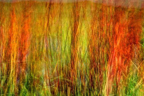 Colorful red waving dune grass von Hans Kwaspen
