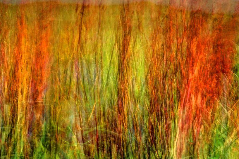 Dünengras impressionistisch von Hans Kwaspen