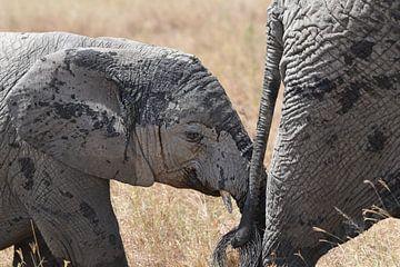Bébé éléphant sur Koolspix
