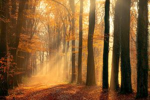 Laan in herfst kleuren van Thomas Jansen