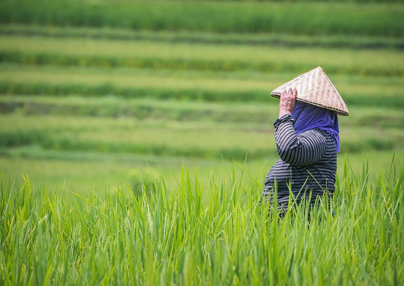 Werken op de rijstvelden van Tomasz Baranowski