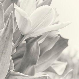 Tulipes sur Anouschka Hendriks