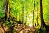 Beautiful forest van Günter Albers thumbnail
