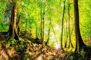 Wald im Sommer von Günter Albers