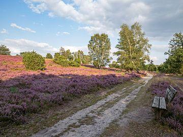 Wandelpad op de Lüneburger Heide van Katrin May