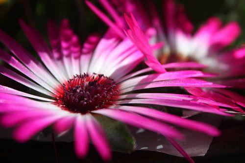 Colourful flowers in the sunshine von Leontien van der Willik-de Jonge