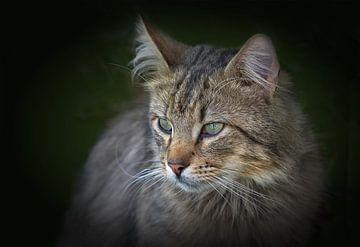 Katzen Porträt von Dieter Beselt