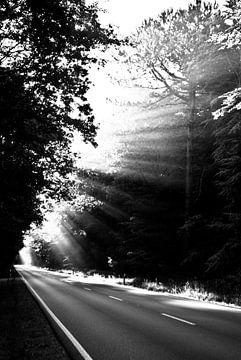 Sonnenstrahlen von Norbert Sülzner