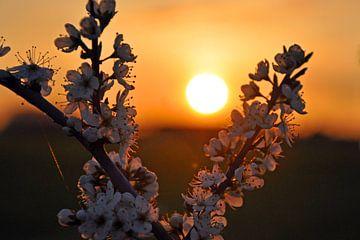 Zonsondergang in de Achterhoek van Jaimy Buunk