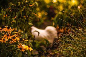 herfst, najaar, bloemen, kip
